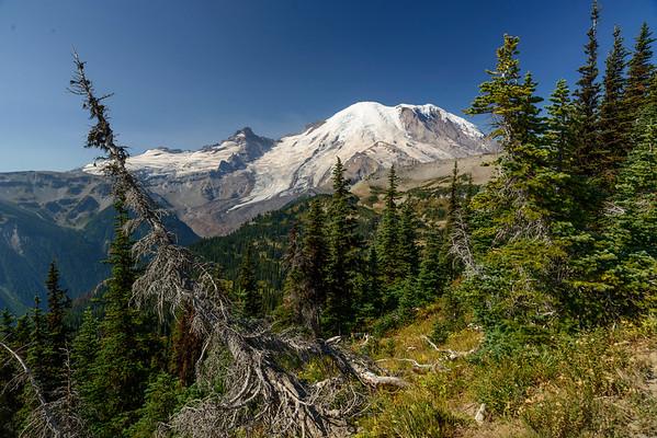 Mt Rainier Summer 2015