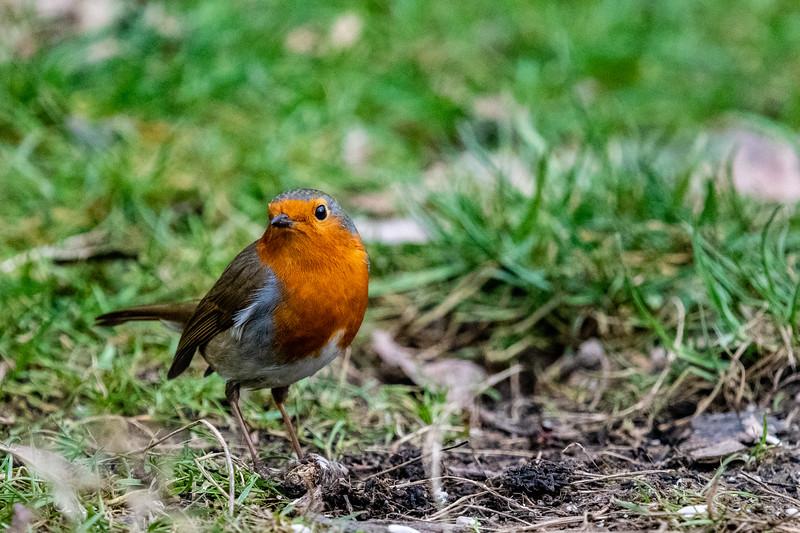 Robin-10.jpg