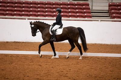 Horse 149