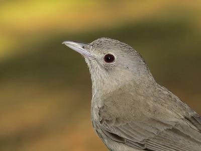 BIRDS - MEDIUM