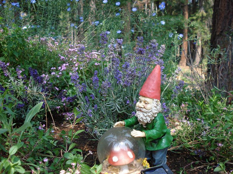 New Gnome 6-25-2008