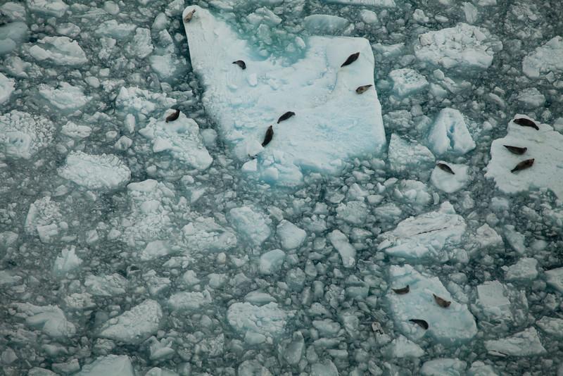 Alaska Icy Bay-3916.jpg