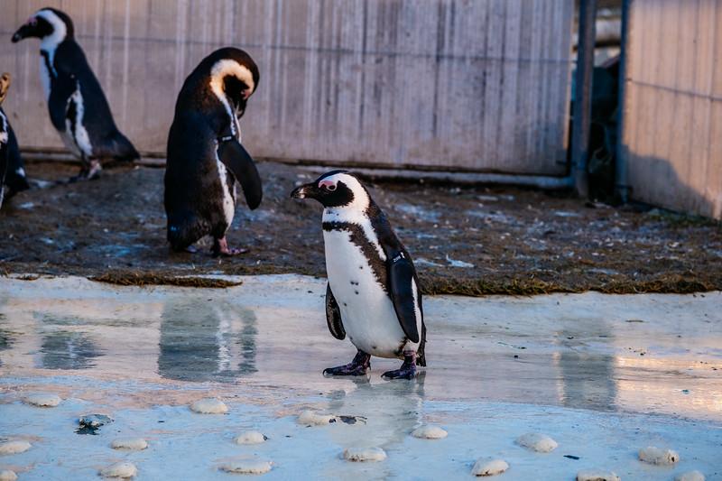 Tonis Zoo-0427.jpg
