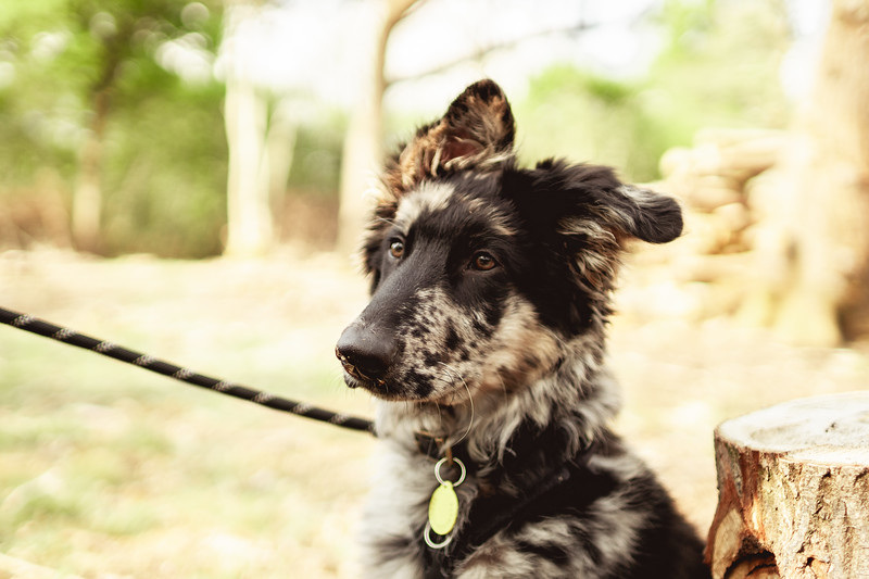 Drew_Irvine_Photography_2019_Ragnar_Dog_Walk_Puppy-19.jpg