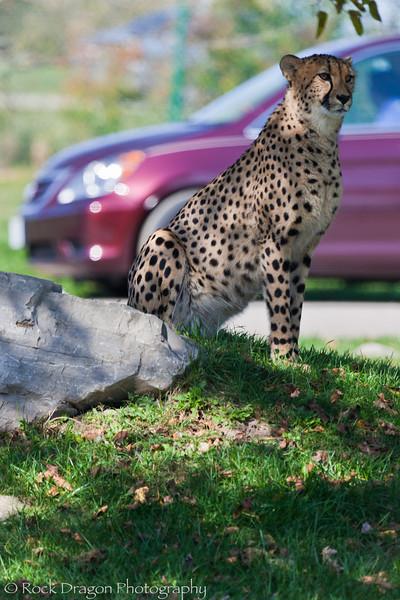 africansafari-14.jpg