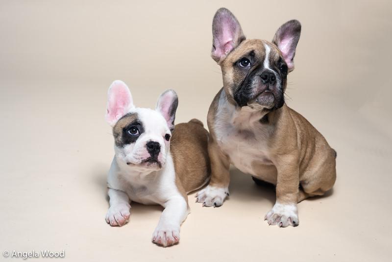 Puppies60.jpg