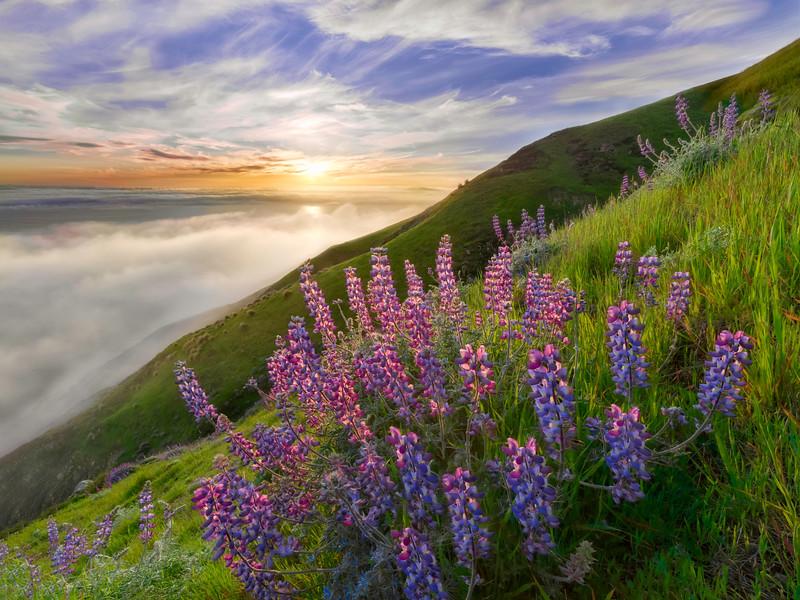 Big Sur Spring