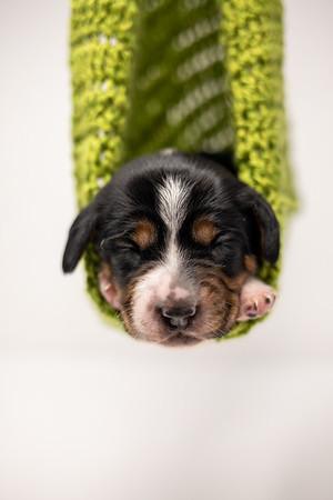 Puppies-12-06-20