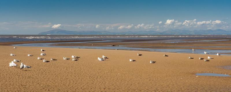 Gulls on Blackpool Beach