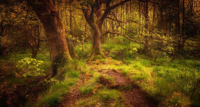 Forest Shadows-159.jpg