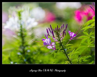 Unknown-flower 39