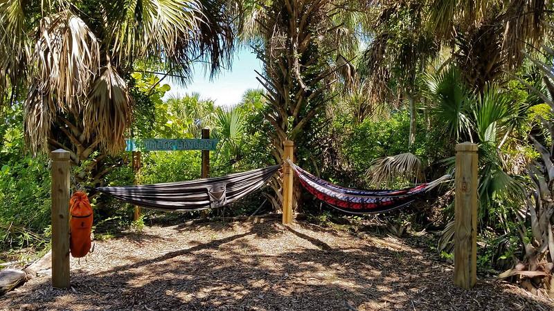 Hammocks hanging under palm trees