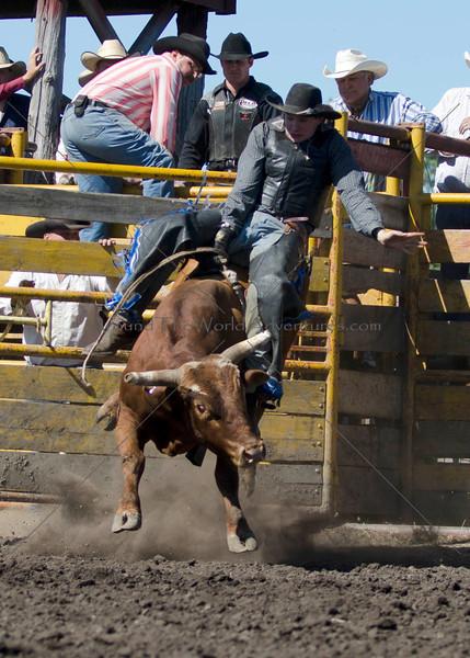 Bulls Sunday 2011