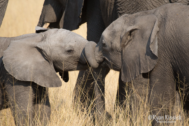 Baby elephants. The best creatures of all time.
