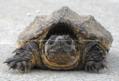 018-turtle-madison_co-09jun08-c1-0206