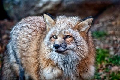 Ladota Wolf Preserve