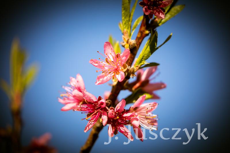 Jusczyk2021-9047.jpg