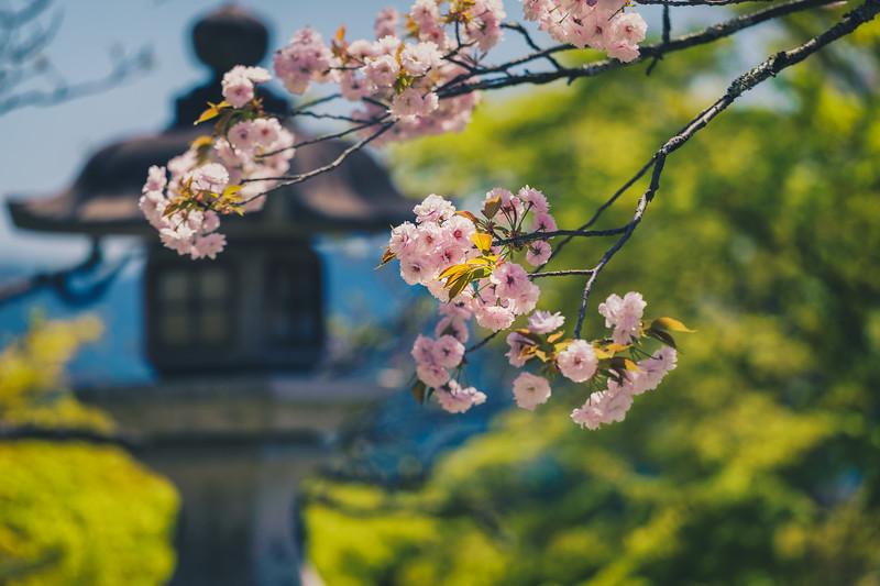 Beauty in Kurama-Dera