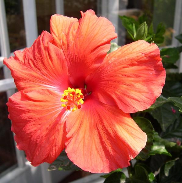 Summer edited 2004 010.jpg