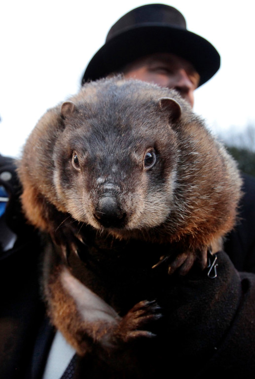 . FILE - In this file from Feb. 2, 2009, John Griffiths, a handler of the weather-predicting groundhog Punxsutawney Phil, holds Phil after removing him from his stump at Gobbler\'s Knob on Groundhog Day, in Punxsutawney, Pa.. The state\'s tourism department says Phil will text his weather prediction to those who sign up to have texts sent to their mobile phones. (AP Photo/Carolyn Kaster)