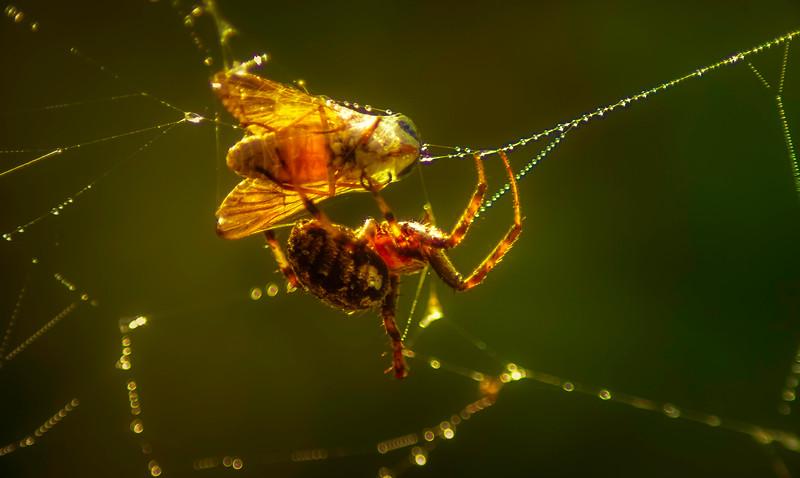 Spiders-Arachnids-006.jpg
