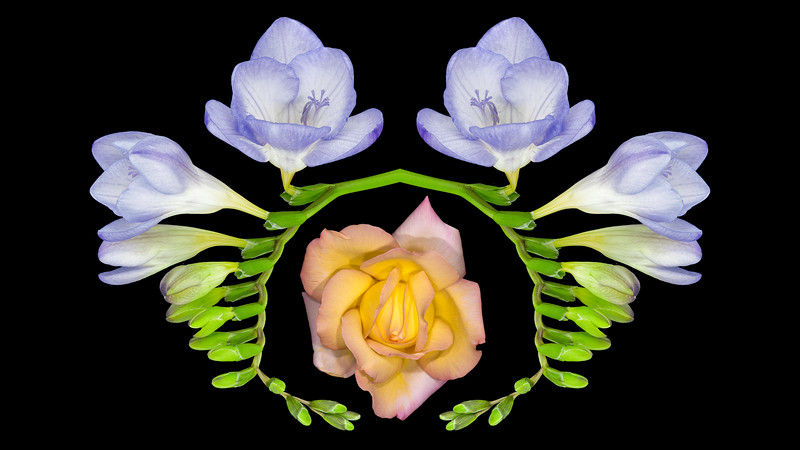 Blue Bells Reflected Roses 16x9.jpg