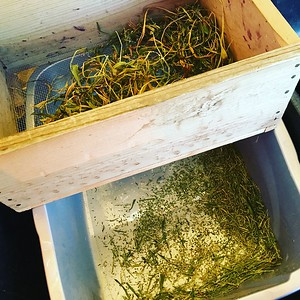 2017 North Branch Summer Seed Processing