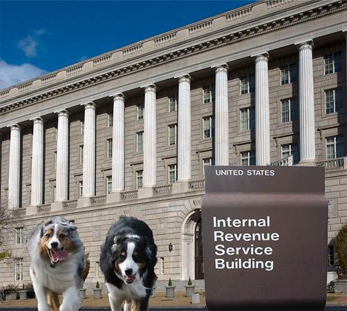 IRS.GaWy_650x583.jpg