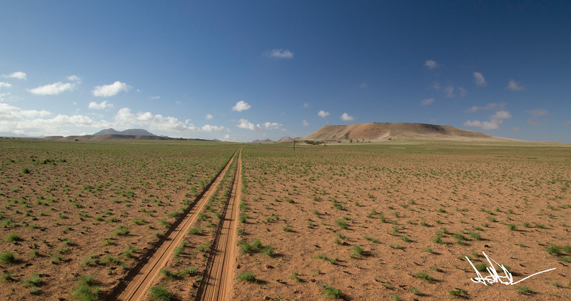 Namib after rain-1.jpg
