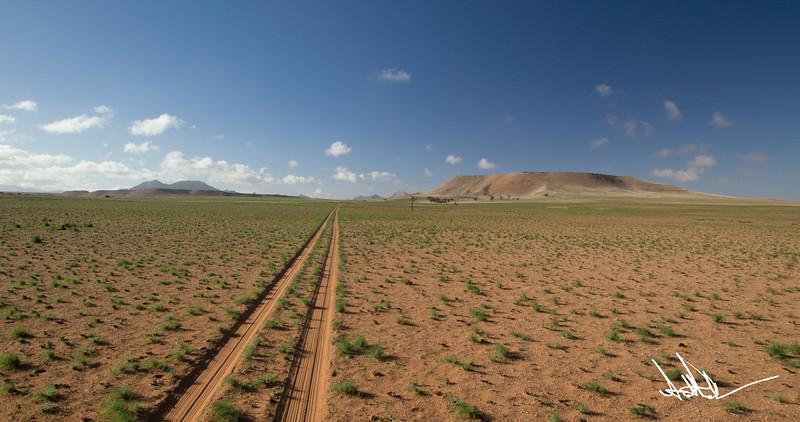 Namib after rain-1.jpg