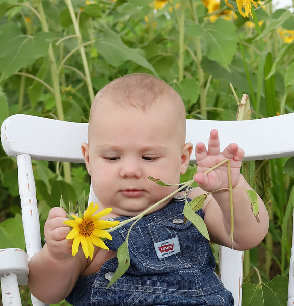 Leo sunflowers 2020