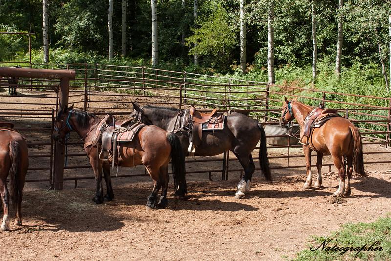 Horse-002.jpg