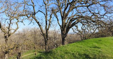 Shadow Cliffs Regional Park