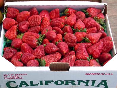 OC2003-strawberries2