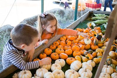 Pumpkin Picking 2015
