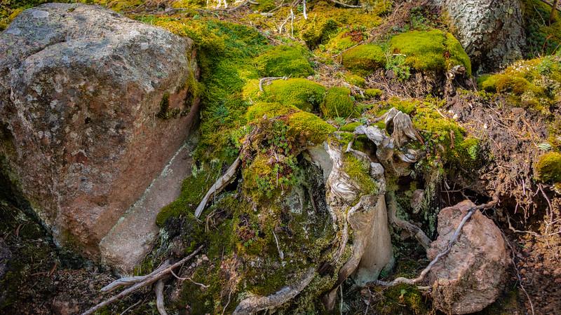 North-facing moss