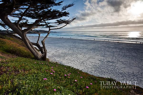 Carmel + Monterey