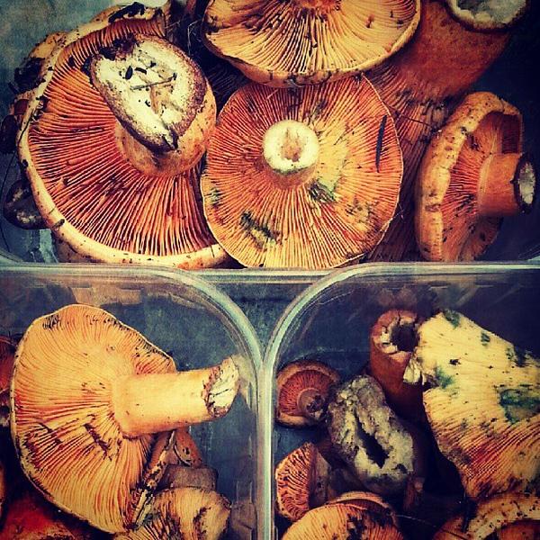 mushroom-season-has-begun-incostabrava-bring-on-the-funghi_9931497403_o.jpg
