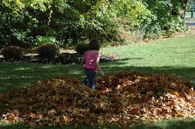 Leaf Fun 2008