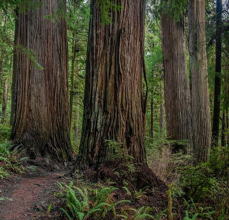 Jedediah Smith Redwoods State Park_Mill Creek Region