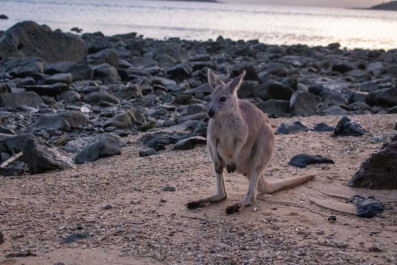 Australia_488.jpg