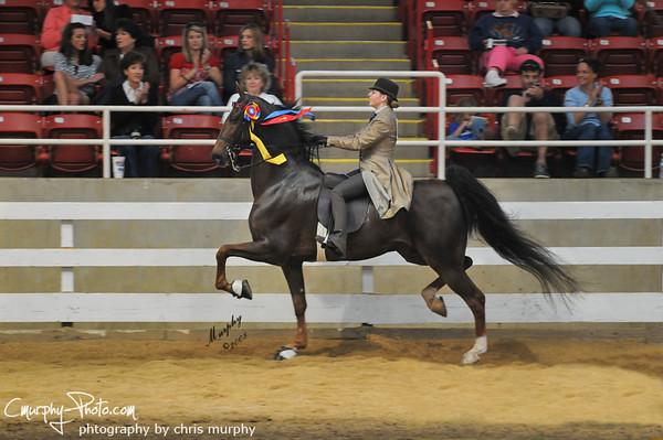 The National Horseman