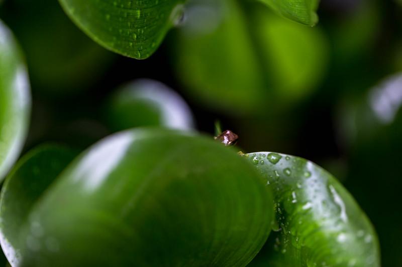 kaila_drayton_photography-0011.jpg