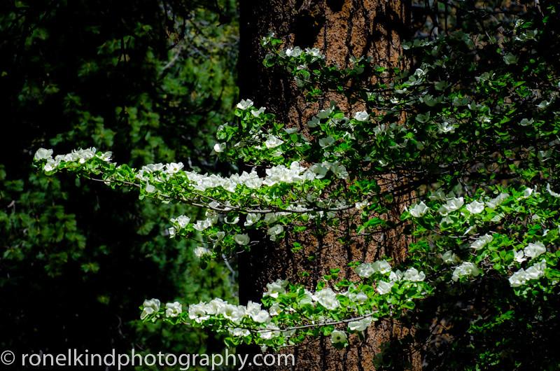Yosemite-0005.jpg