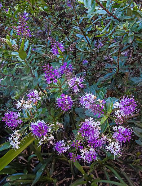 encenitas botanical04.jpg