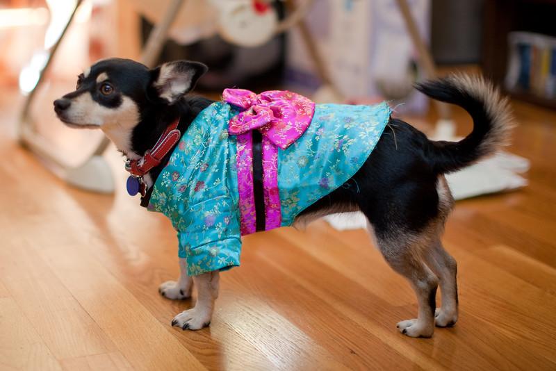 Dog-sushi-halloween-26.jpg