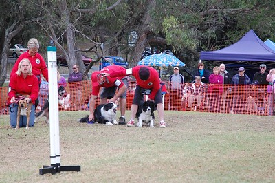 Flyball, Ringwood Highland Games - March 2008