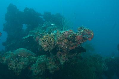 Palau Diving Liveaboard January 2010