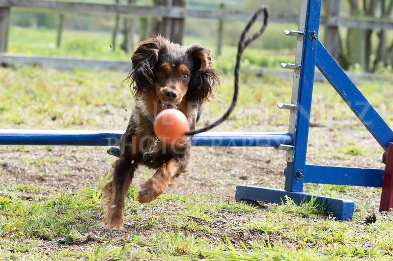 Dogs-7988.jpg