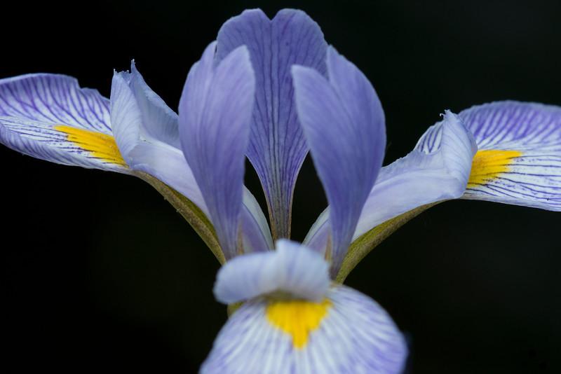 Iris_0913.jpg